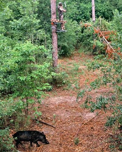 httpswww.outdoorlife.comsitesoutdoorlife.comfilesimport2014importImage2008legacyoutdoorlife100-hog_tree_stand.jpg