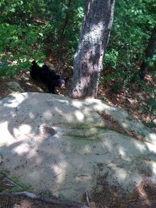 Black Bear Attack!