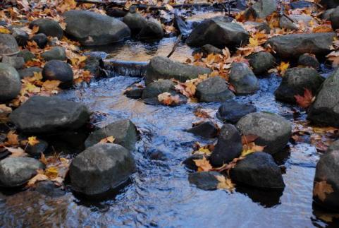 httpswww.outdoorlife.comsitesoutdoorlife.comfilesimport2014importImage2009photo7Decfoliage_28.jpeg