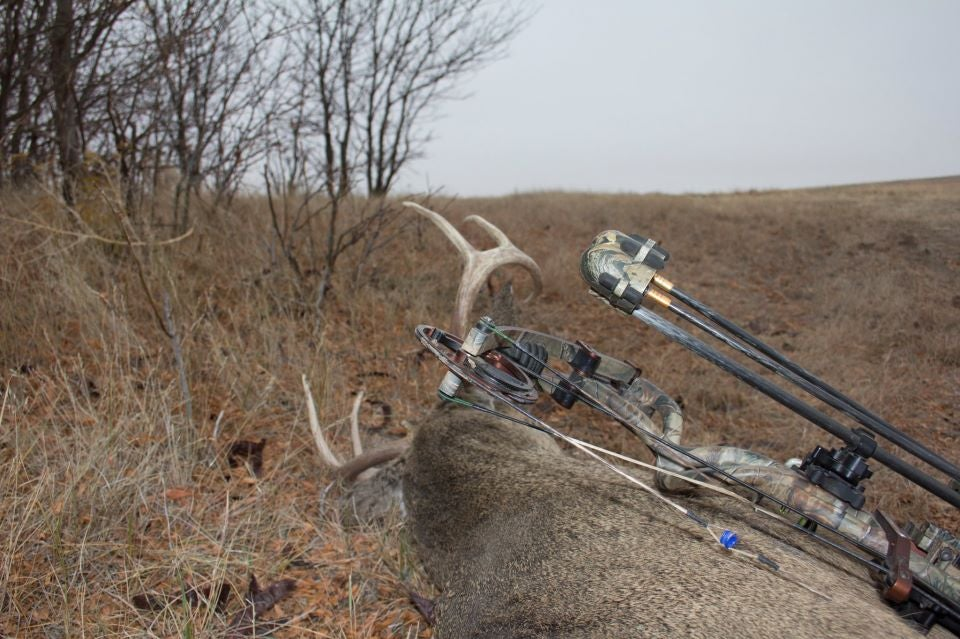whitetail bow hunting