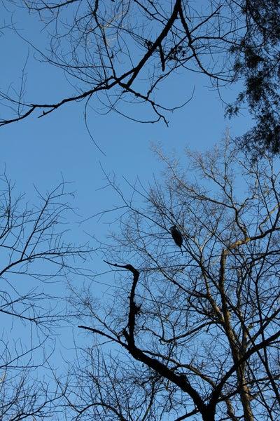 httpswww.outdoorlife.comsitesoutdoorlife.comfilesimport2013images20110222_Possum_treed_0.jpg