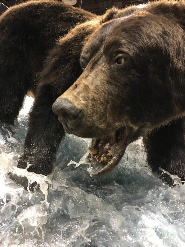 brown bear water mount