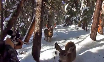 Video: Backcountry Hunter Gets Extremely Close to Curious Deer