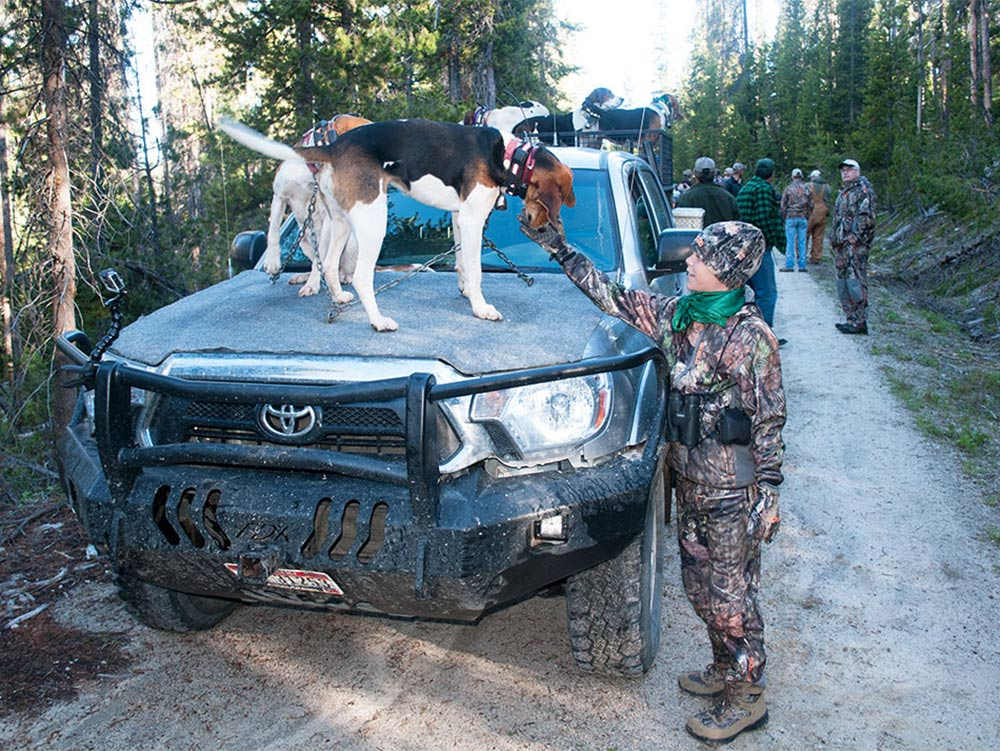 hunting dogs in truck during bear hunt