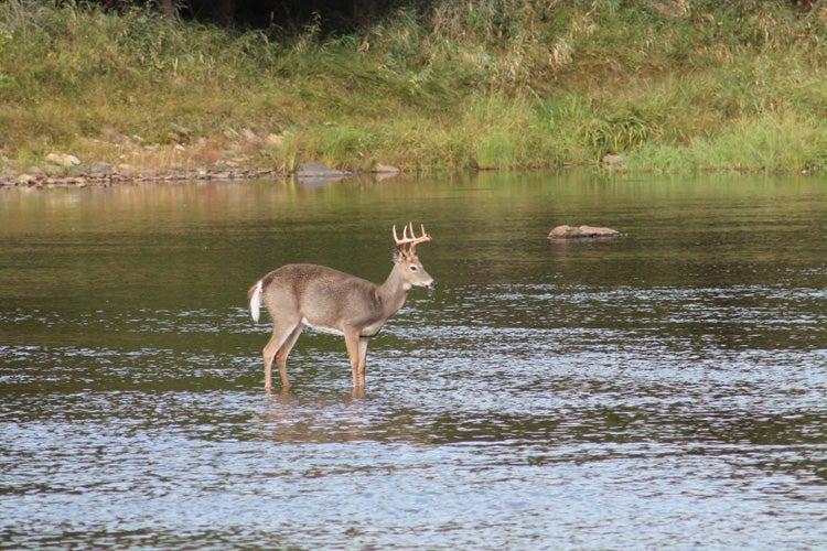 httpswww.outdoorlife.comsitesoutdoorlife.comfilesimport2014importImage2012photo10013215791._Deer_Wolf_sm.jpg