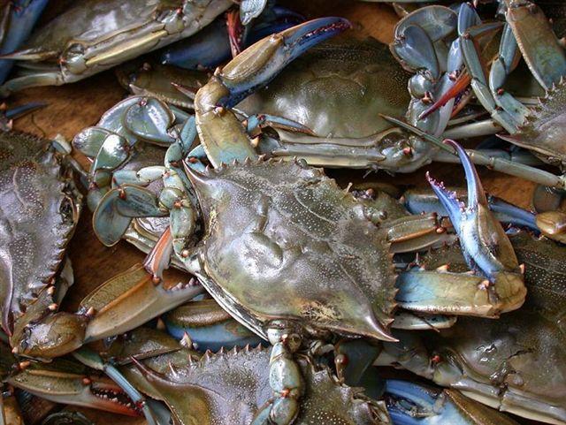 httpswww.outdoorlife.comsitesoutdoorlife.comfilesimport2014importImage2010photo3001014.blue_crab_baits.jpg