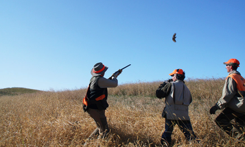 The Upside to an Upland Bird Preserve Hunt