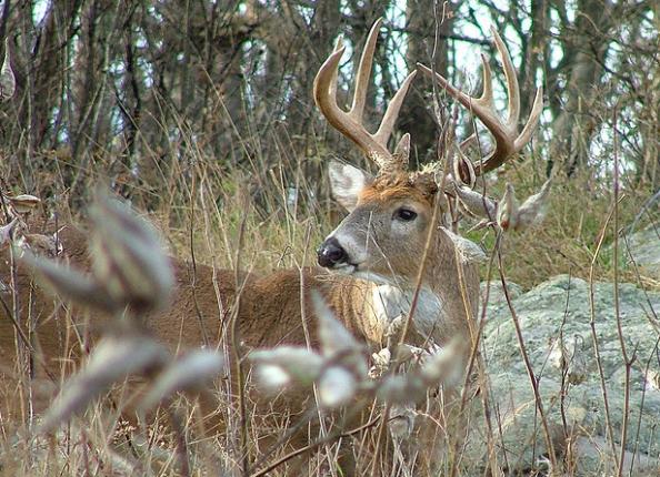 How Barometric Pressure Affects Deer Movement