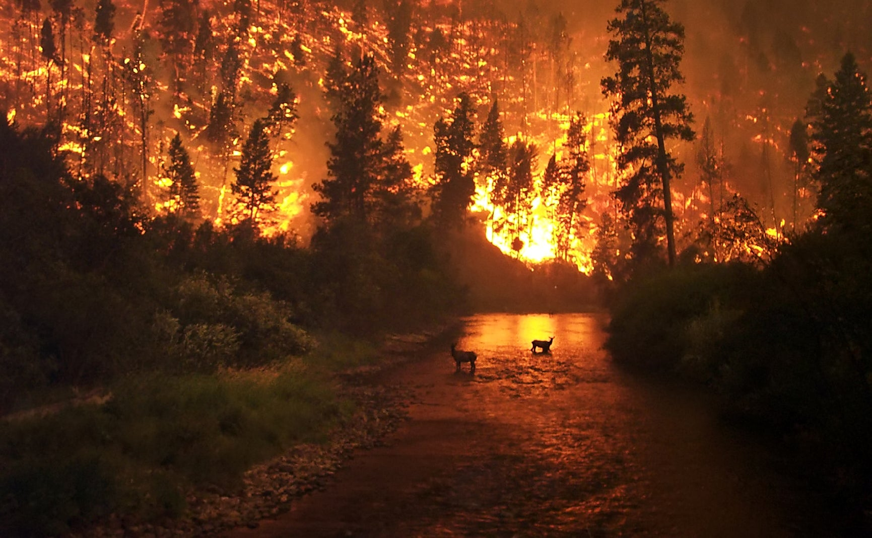 Survival Skills: How to Survive a Wildfire