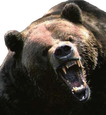 Top Ten Things You Should Not Do When You See A Bear