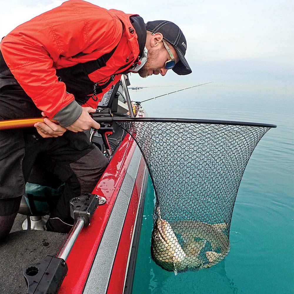 netting giant lake michigan trout