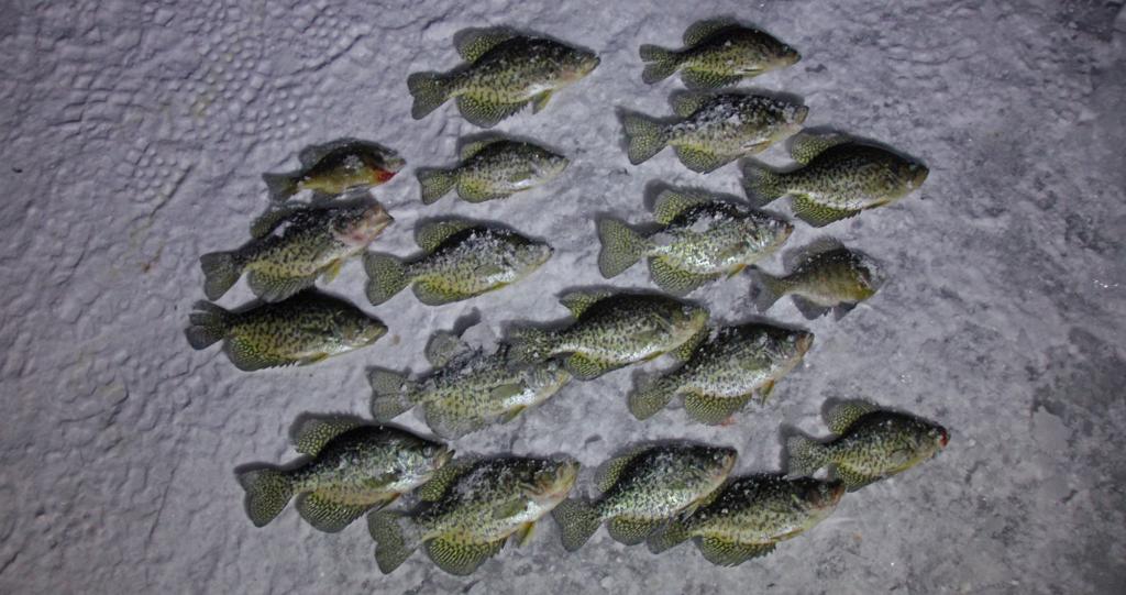 ice fishing crappies