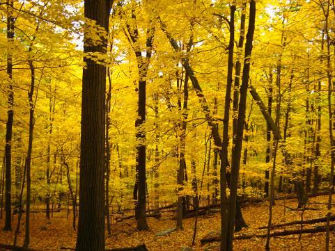 httpswww.outdoorlife.comsitesoutdoorlife.comfilesimport2014importImage2009photo7Decfoliage_23.jpg