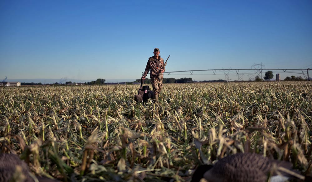 a man hunting geese in a field with a gun dog