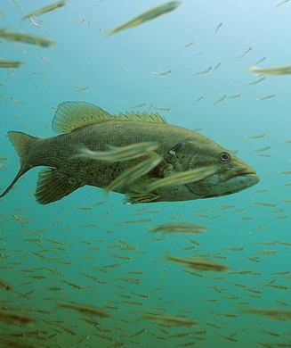 Bass Facts and Myths: 19 Things You Didn't Know About Bass