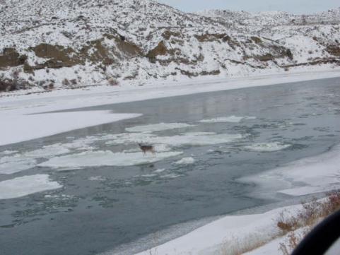 httpswww.outdoorlife.comsitesoutdoorlife.comfilesimport2013images2010128_22_Ice_Flow_Buck_1_0_0.jpg