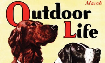 A Short History of Sporting Dog Trends in the 20th Century