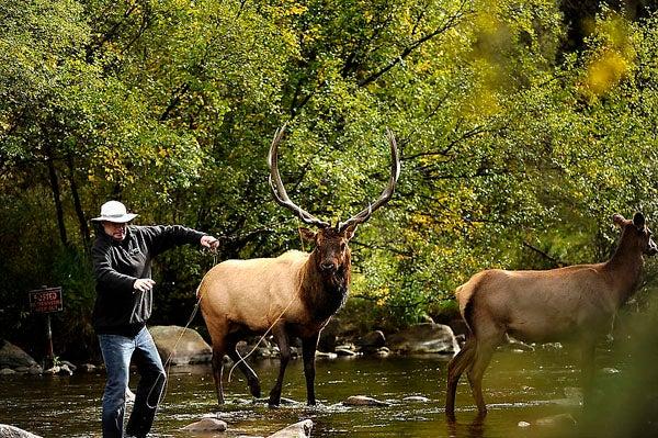 httpswww.outdoorlife.comsitesoutdoorlife.comfilesimport2014importImage2011photo1001321579elkfishing_04.jpg