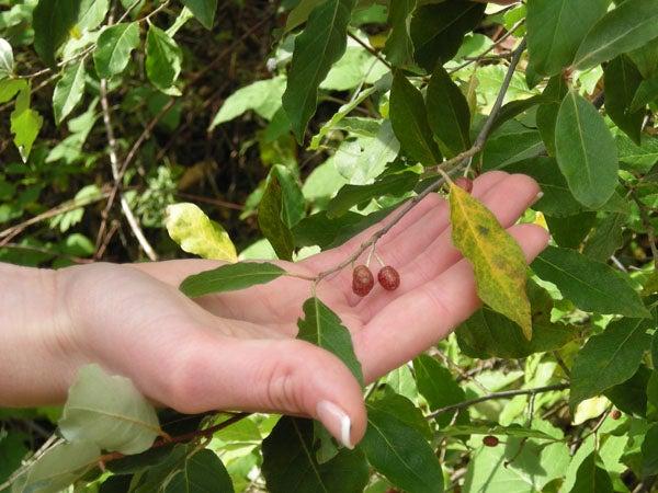 httpswww.outdoorlife.comsitesoutdoorlife.comfilesimport2014importImage2009photo7DSCN0528.JPG