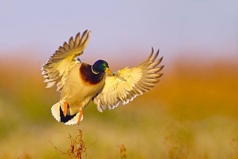 httpswww.outdoorlife.comsitesoutdoorlife.comfilesimport2014NBWM232870d.jpg
