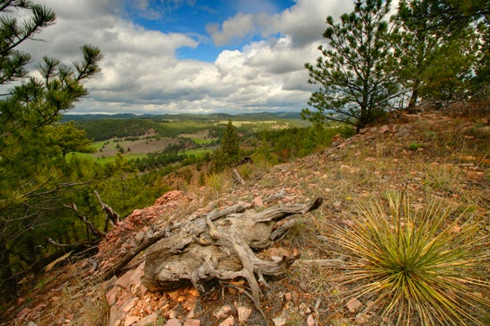 Development vs Conservation: How Much is Elk Habitat Worth?