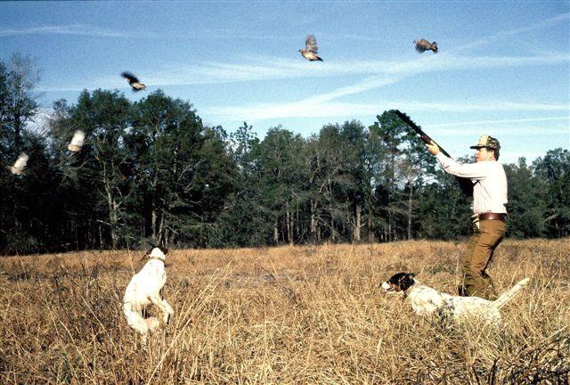 httpswww.outdoorlife.comsitesoutdoorlife.comfilesimport2014importImage2009photo714._Maryland.jpg