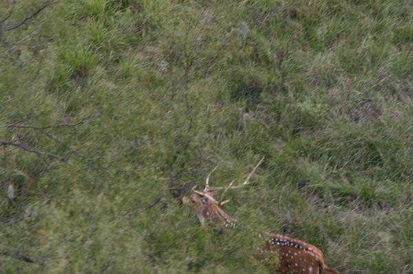 httpswww.outdoorlife.comsitesoutdoorlife.comfilesimport2014importImage2010photo30010FordRanch_077.jpg