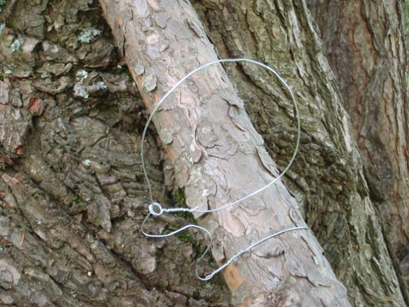Survival Skills: How to Make a Squirrel Snare Trap