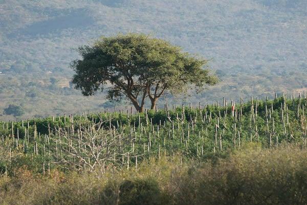 Africa_27