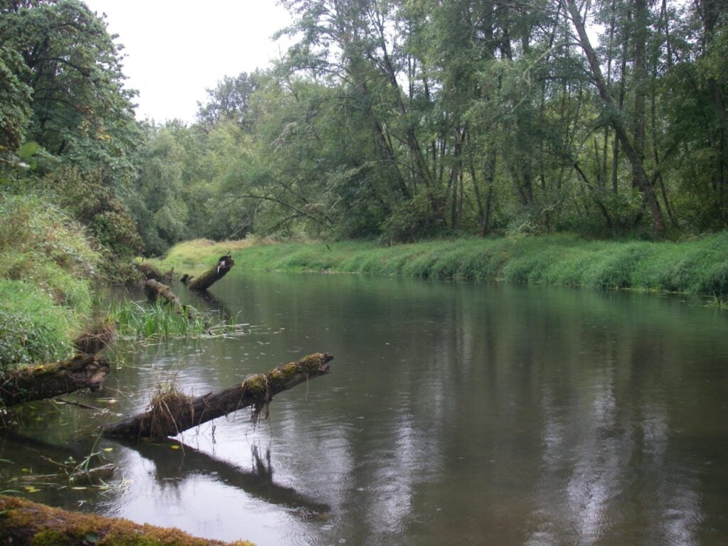 Chub are essentially an indicator that the health of the Willamette River system is improving.