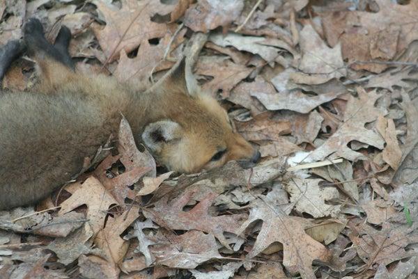 httpswww.outdoorlife.comsitesoutdoorlife.comfilesimport2013images201006IMG_1796_0.jpg