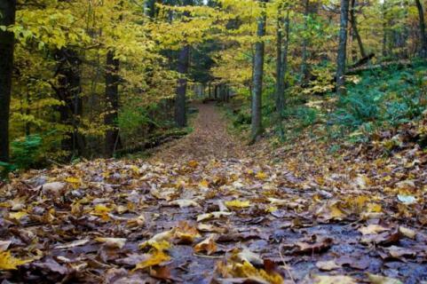 httpswww.outdoorlife.comsitesoutdoorlife.comfilesimport2014importImage2009photo7Decfoliage_25.jpg