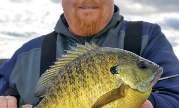 How to Icefish for Panfish Like a Pro this Winter