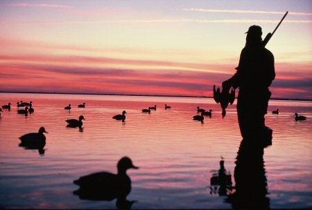 httpswww.outdoorlife.comsitesoutdoorlife.comfilesimport2014importImage2009photo3N._Carolina_ducks_0.jpg