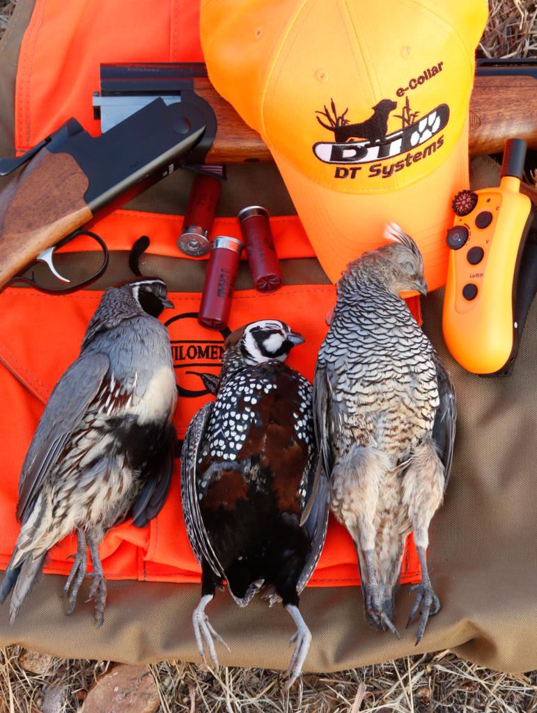 """""""quail"""
