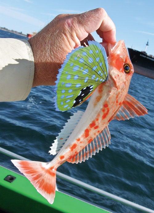 httpswww.outdoorlife.comsitesoutdoorlife.comfilesimport2013images201104140-0411fish_facts_10_0.jpg