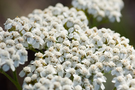 Survival Skills: 3 Wild Medicinal Plants You Can Find Now