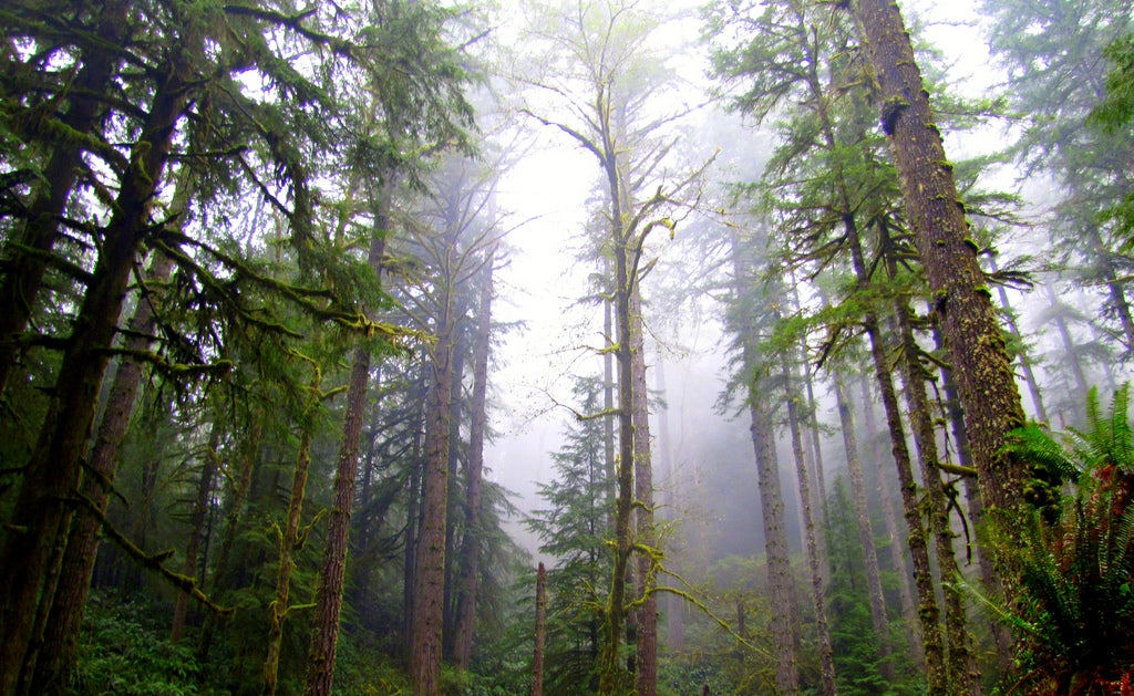 Politicians Vote to Axe Oregon's Elliott State Forest