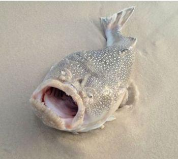 Angler Catches Freak Fish off Florida Beach