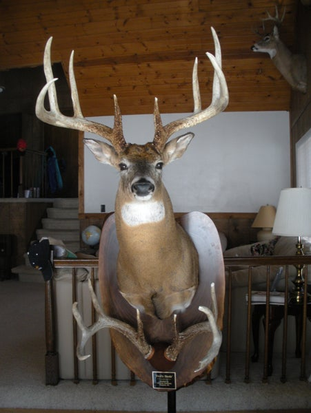 Record 8 Pointer Killed Illegally