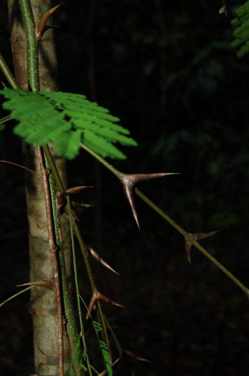 httpswww.outdoorlife.comsitesoutdoorlife.comfilesimport2014importImage2010photo3001012_0.jpg