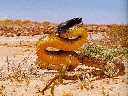 Australian Teenager Bitten by Deadliest Snake in the World, Survives
