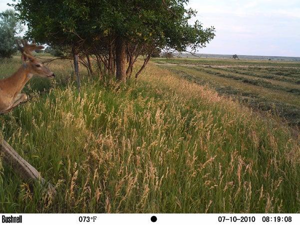 httpswww.outdoorlife.comsitesoutdoorlife.comfilesimport2014importImage2010photo30010RQ25.jpg