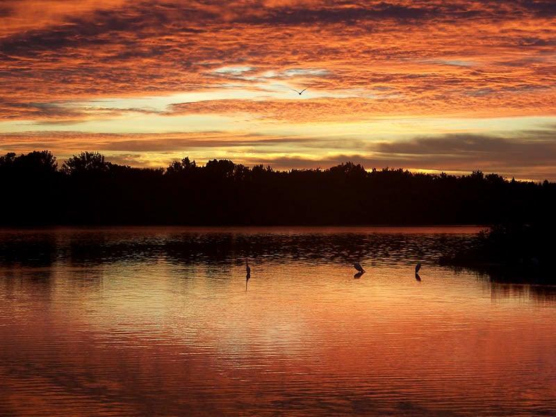 httpswww.outdoorlife.comsitesoutdoorlife.comfilesimport2014importImage2010photo1001320495Nature-31.jpg
