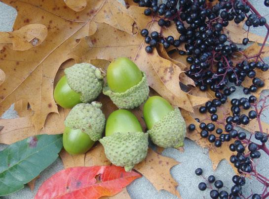 Survival Skills: 10 Most Nutritious Fall Wild Edible Plants