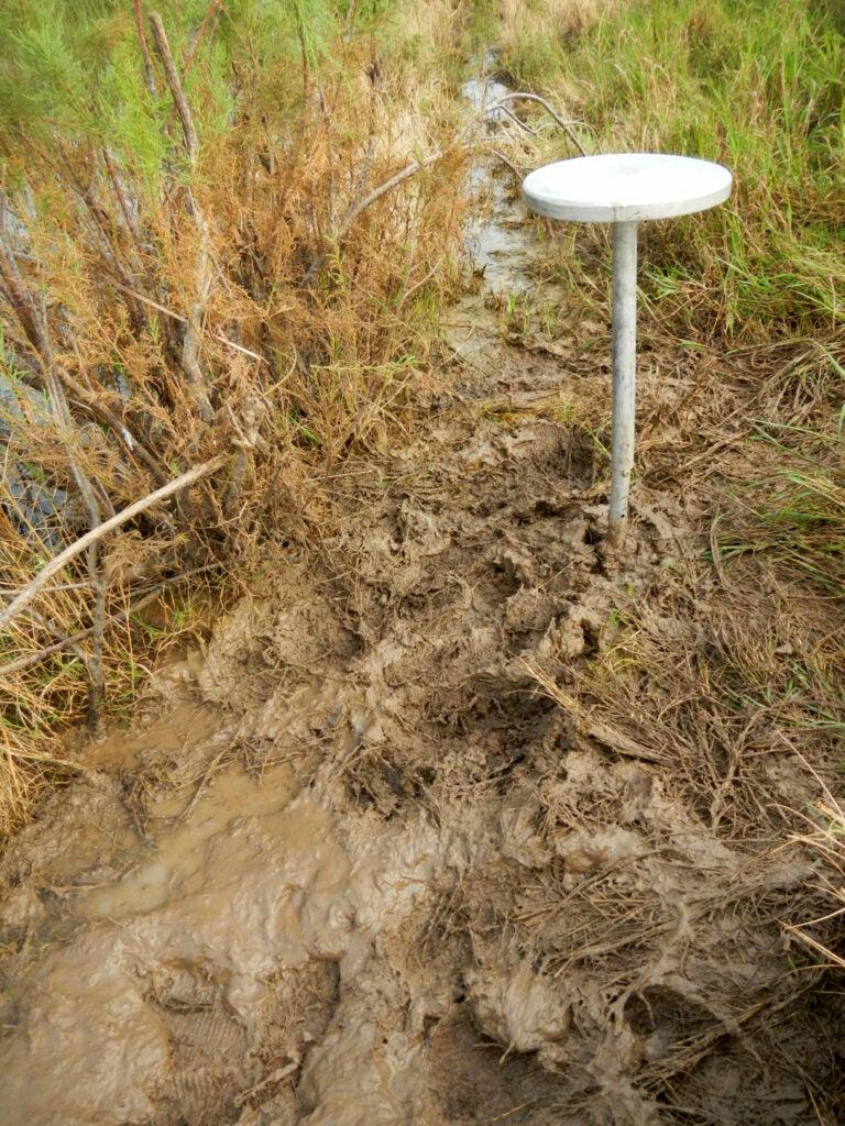 muddy duck hunting spot