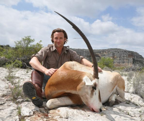 Hunting an 'Extinct' Species: How Texas Ranches Saved the Scimitar-Horned Oryx