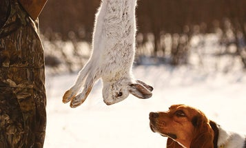 7 Hunting Breeds That Make Great Rabbit Dogs