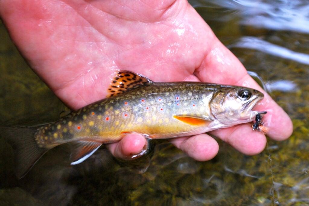 httpswww.outdoorlife.comsitesoutdoorlife.comfilesimport2013images201007slide17_4.jpg