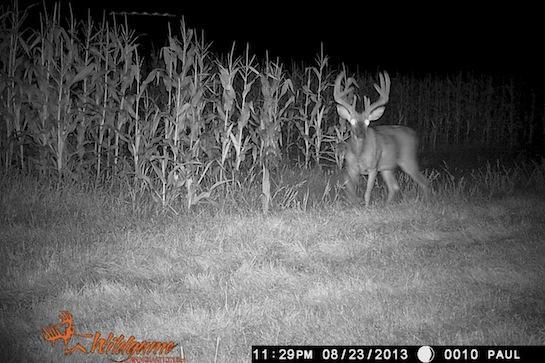 Deer Hunting: Luck and Hard Scouting Lead to Big Minnesota Buck